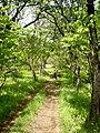 Тропинка в лесу - panoramio.jpg