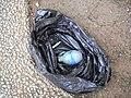 פצצות דמי - צולמו בשדרות רוטשילד בתל אביב - משמרת בוקר משטרת ישראל SDC12172.JPG