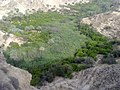 باغ لیمو Lemon Garden - panoramio.jpg