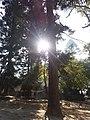 श्लेष्मान्तक वन (मृगस्थली) 01.jpg