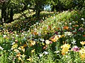 可睡ゆりの園 KASUI-Lily's Park - panoramio.jpg