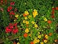 士林官邸20080406 - panoramio - Tianmu peter (9).jpg