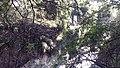 文山溫泉步道2.jpg