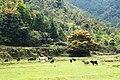 新丰司茅坪林场20150412 - panoramio (34).jpg