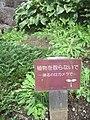 植物を取らないで 撮るのはカメラで (2855603828).jpg