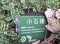 植物園中的植物及樹木花草(包括歷史遺跡)-46.jpg