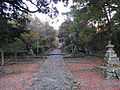 秋の参道.JPG