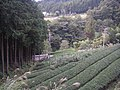茶畑(富岡) - panoramio.jpg
