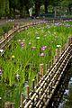 菖蒲池 - panoramio.jpg