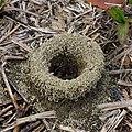 蟻穴 Ant Hole - panoramio.jpg