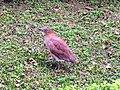 鳥0000004.jpg