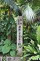 110321 Native forest of Satake palm trees Yonehara Ishigaki Island Japan02n.jpg