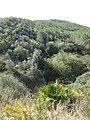 122 Margalló vora el barranc de Salomó (Vespella de Gaià).jpg