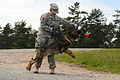 131st Military Working Dog Detachment device detection training 130611-A-BS310-305.jpg