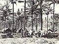 14-32nd Battalion at Cutarp (AWM image 084320).JPG