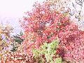 20011020ft-mtn4-oak (6186064973).jpg