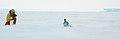 2007 Snow-Hill-Island Luyten-De-Hauwere-Emperor-Penguin-57.jpg