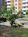 2011-05-28 Фотостандарт. Лавочка № 4. - panoramio.jpg