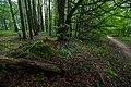 20120612 Остров Юршинский. В заброшенном парке усадьбы Делло.jpg