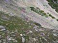 2015.07.11 14.55.23 DSCN2716 - Flickr - andrey zharkikh.jpg