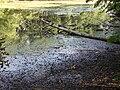 20150811 xl P1020020 Strausberg Trockenheit im August - das Annafliess (Am Schwanenteich) ist seit Wochen ausgetrocknet.JPG