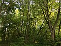 2016-05-26 18 15 53 Woodland along a walking path in the Franklin Farm section of Oak Hill, Fairfax County, Virginia.jpg