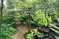 2016 Singapur, Ogrody botaniczne (213).jpg