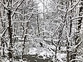 2018-03-21 12 56 43 Snow-covered trees and bushes in a swamp along a walking path in the Franklin Farm section of Oak Hill, Fairfax County, Virginia.jpg