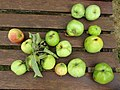 2018-08-13 Granny smith apples, Trimingham.JPG