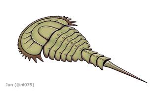 <i>Limuloides</i>