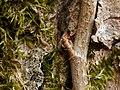 2021-04-12 14-31-01 detail-arbre.jpg