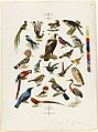 22 Species of Birds (Boston Public Library).jpg