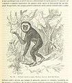 249 of 'Antropologia generale. Lezioni su l'uomo secondo la teoria dell'evoluzione ... raccolte e pubblicate ... da G. Raverdino e G. B. Vigo' (11254302345).jpg