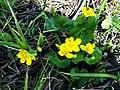 "3533. ""Swamp Bouquet"".jpg"