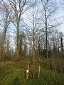 3634 Loenersloot, Netherlands - panoramio (18).jpg