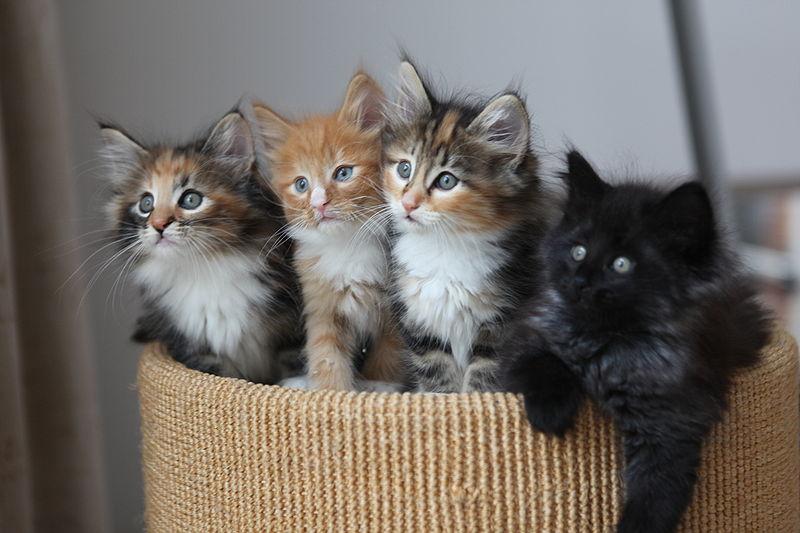 File:4 Kittens.jpg