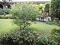 7457Saint Dominic Church Quezon Cityfvf 19.JPG