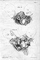 A. von Haller, Opuscula sua anatomica... Wellcome L0023727.jpg