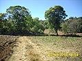 AGUACATES - panoramio.jpg