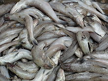 A close-up of fish1.JPG