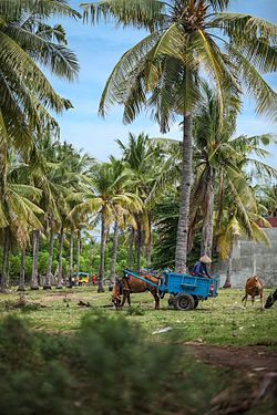 A local farmer working with his animals and cart portrait Wokshots.jpg