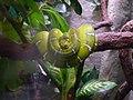 A snake - panoramio.jpg