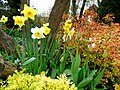 A spring display - geograph.org.uk - 1251053.jpg