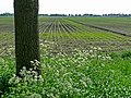 A view over the fields of Laaghalerveen, direction Smilde; The Netherlands, Spring 2012.jpg
