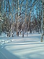 A winter forest in the North-West of Sakhalin. 7.jpg