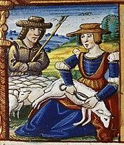 A woman shearing sheep.JPG
