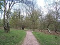 Abraham's Valley, Cannock Chase - geograph.org.uk - 407107.jpg