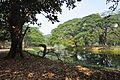 Acharya Jagadish Chandra Bose Indian Botanic Garden - Howrah 2011-01-08 9757.JPG