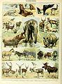 Adolphe Millot mammiferes B.jpg