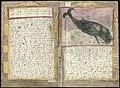 Adriaen Coenen's Visboeck - KB 78 E 54 - folios 070v (left) and 071r (right).jpg